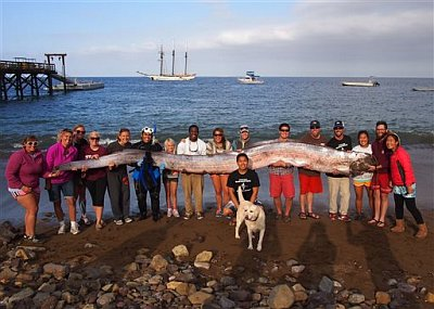 oarfish Catalina