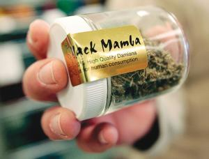 spice up your life with black mamba